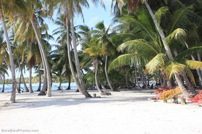 Bora Bora white sand beach with palm trees | boraboraphotos.com
