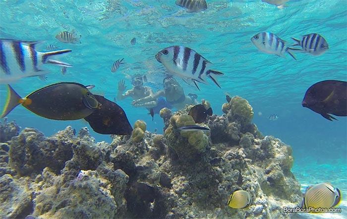 bora-bora-snorkeling-around-coral-gardens